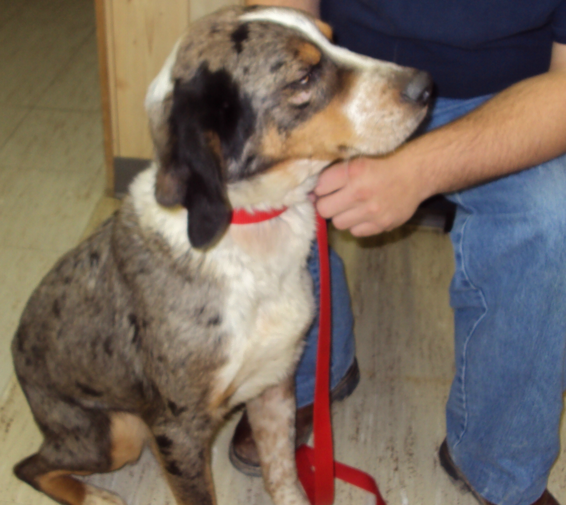 Animal Shelter Adoptions | Jefferson County, Illinois